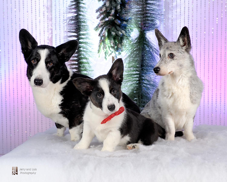 1897-Family-Dog-Holiday-2015