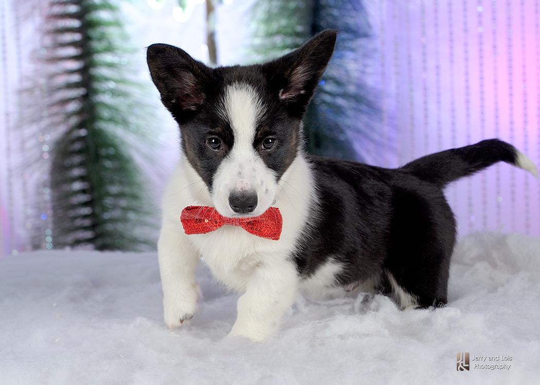 1910-Family-Dog-Holiday-2015