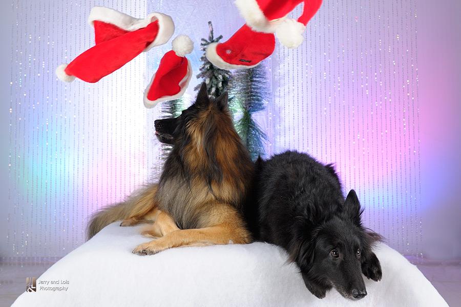 3186-Family-Dog-Holiday-2015