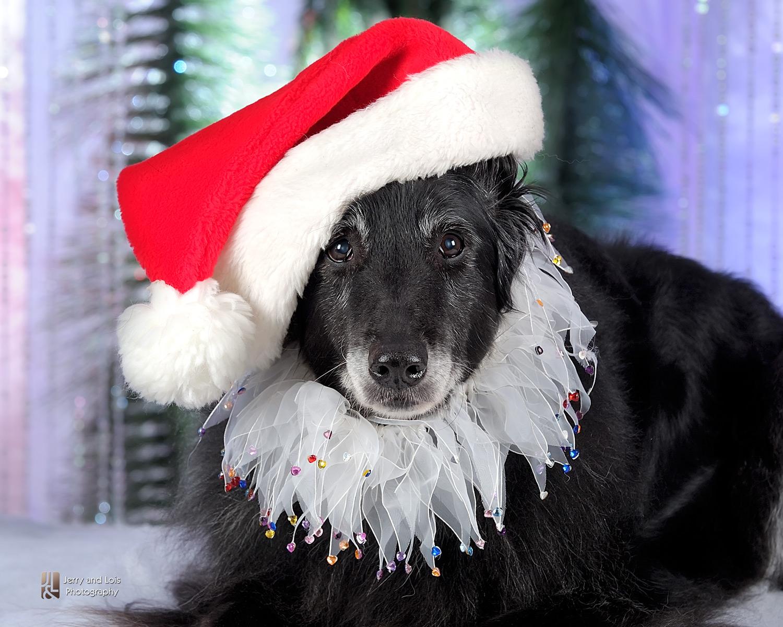 3343-Family-Dog-Holiday-2015