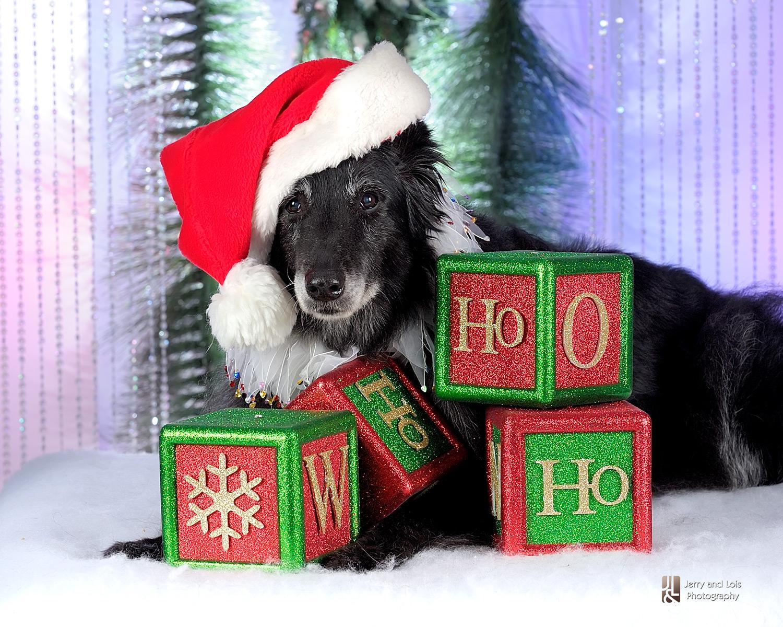 3410-Family-Dog-Holiday-2015