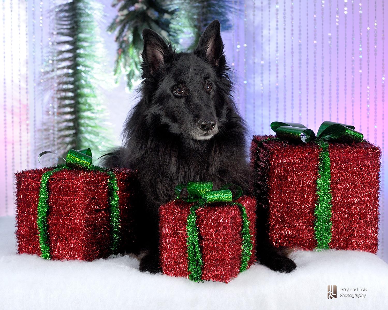 3415-Family-Dog-Holiday-2015
