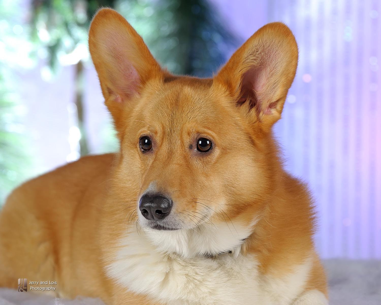3592-Family-Dog-Holiday-2015