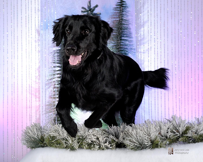 3640-Family-Dog-Holiday-2015