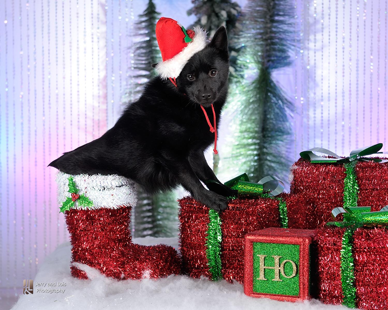 3835-Family-Dog-Holiday-2015