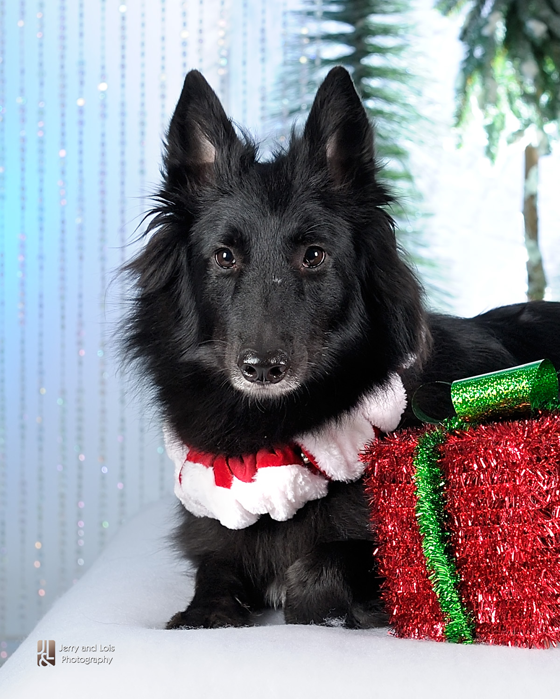 4376-Family-Dog-Holiday-2015