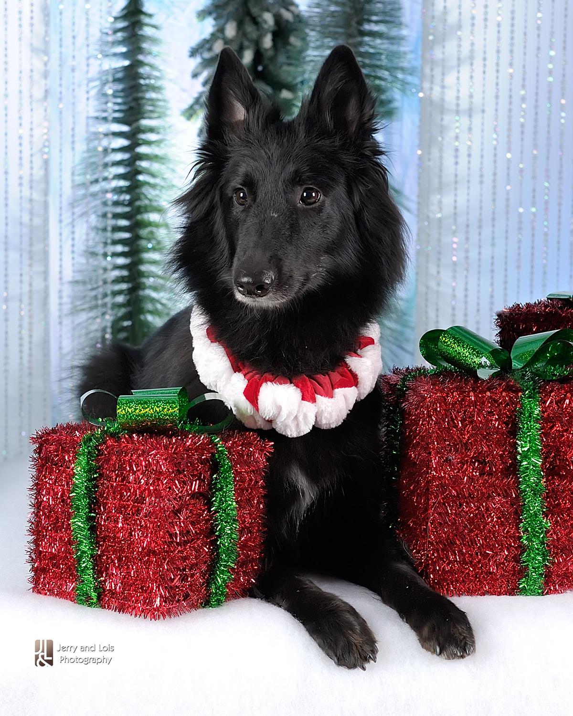 4389-Family-Dog-Holiday-2015