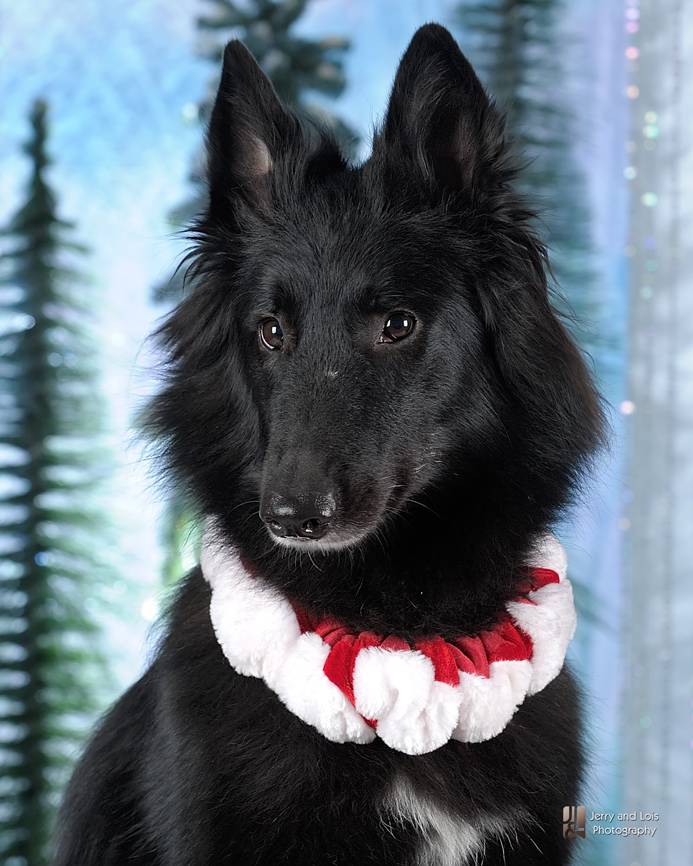 4394-Family-Dog-Holiday-2015