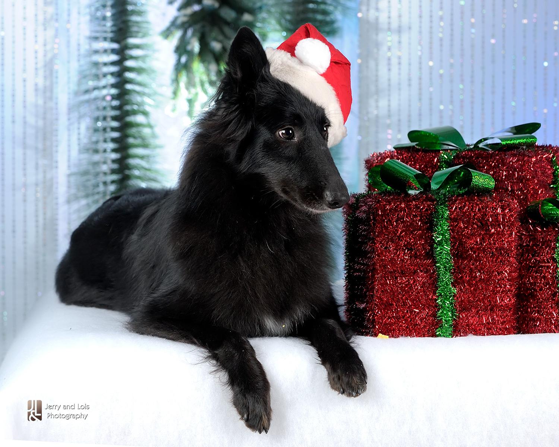 4408-Family-Dog-Holiday-2015