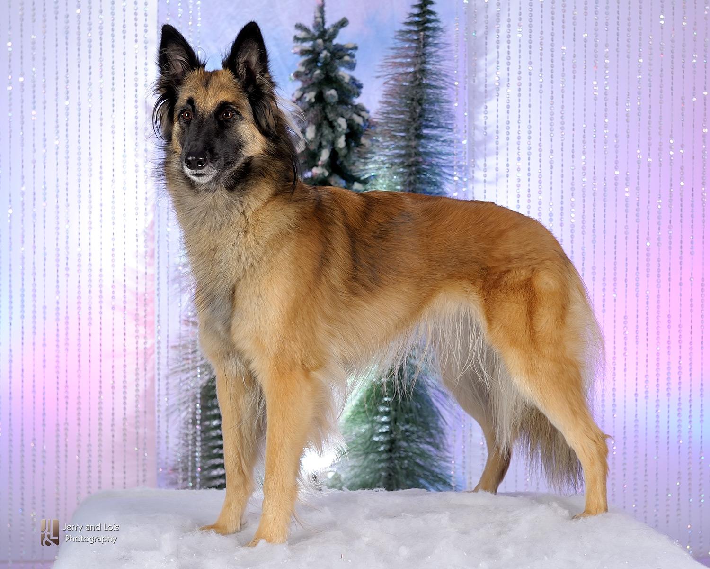 4438-Family-Dog-Holiday-2015